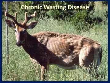 chronic-wasting-disease-national-pike-qdma